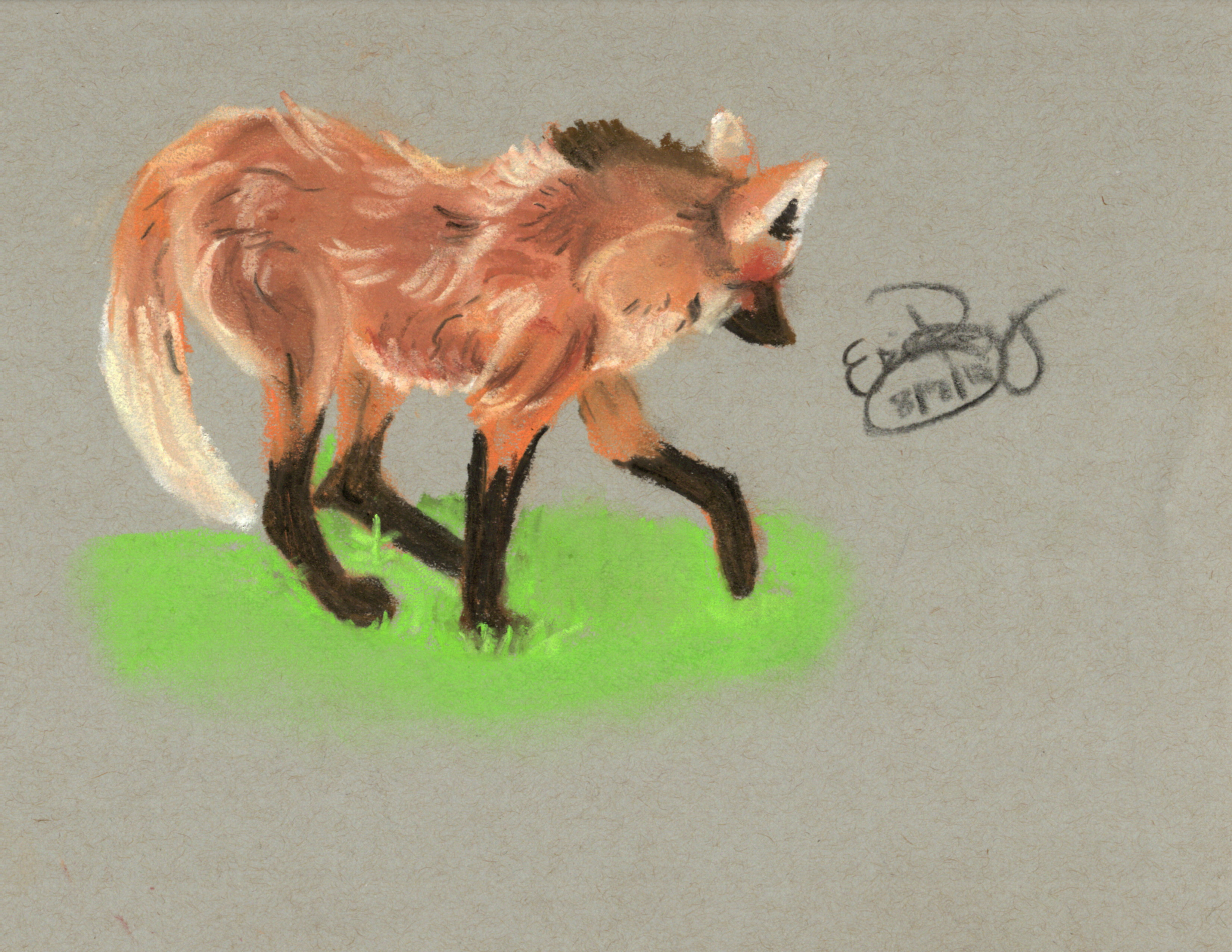 Maned Wolf: Chalk Pastels